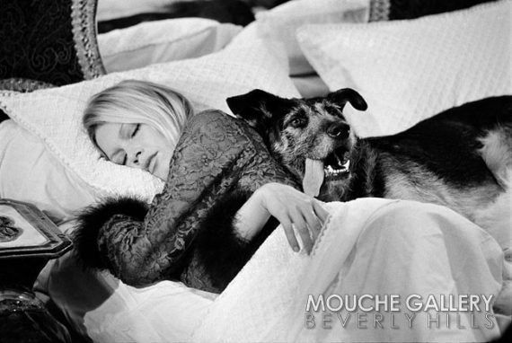 Brigitte-Bardot-W-dog-WM