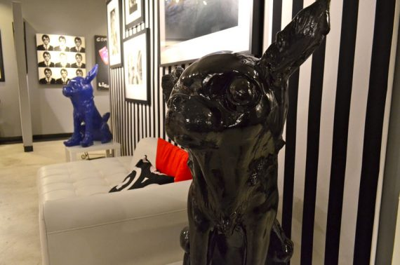 chihuahua-black
