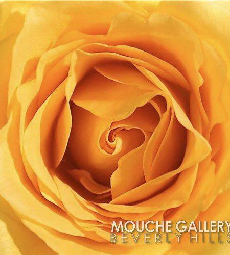 fleetwood-yellow-rose-WM