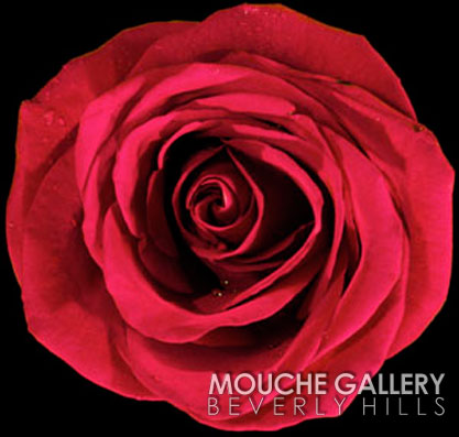english-rose-mick-fleetwood-wm
