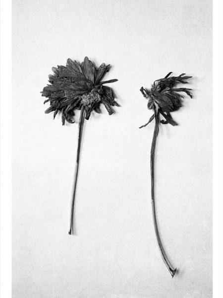 flower-kirkland