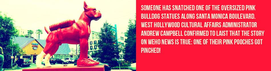 SWEETLOVE-PINK-DOG-NEWS